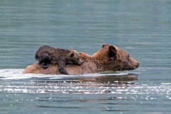 Surfing Grizzly Cub 3