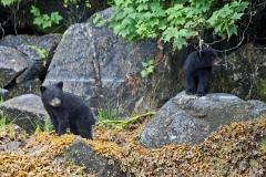 Springtime-Cubs