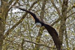 Eagle-Approach