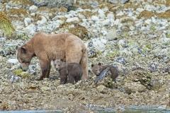 Springtime Mom and Cubs