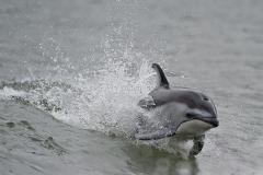 PWS-Dolphin 3