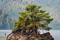 Khutz Tree