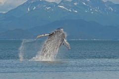 Alaska-Breach