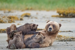 Nursing Grizzlies