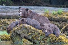 Relaxing Grizzlies