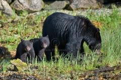 Black-Bear-Twins