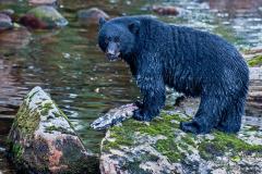 Black Bear and (Old) Chum