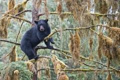 Treetop Dhube