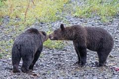 Bear Greeting