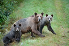 Grizzlies-Crossing