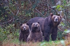 Grizzly Family Portrait