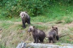 Three-Little-Bears