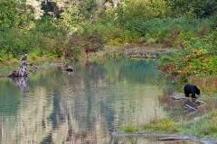 Coastal-Pond-Scene