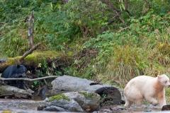 Bears-on-the-Run