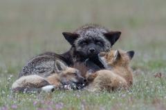 Fox Family Moment
