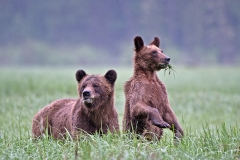 Khutz-Mom-and-Cub
