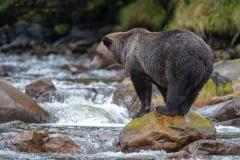 Mouse Creek Fishing