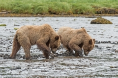 Cubs in Action