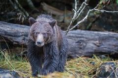 Quill Bear