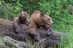 Resting Mum and Cub