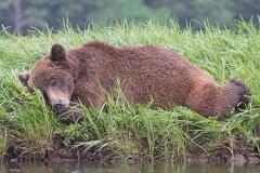 Sleeping Junior