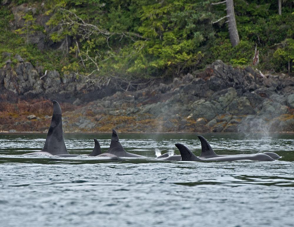 Orca-Pod-A30s.jpg