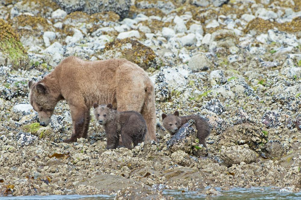 Springtime-Mom-and-Cubs.jpg