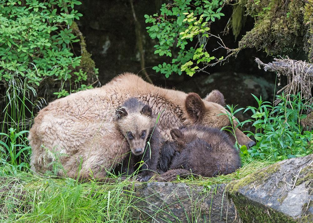 Sleeping-Family.jpg