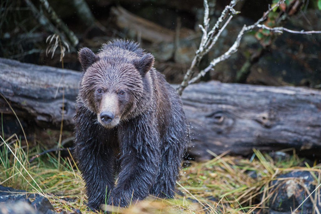 Quill-Bear-1024x682.jpg