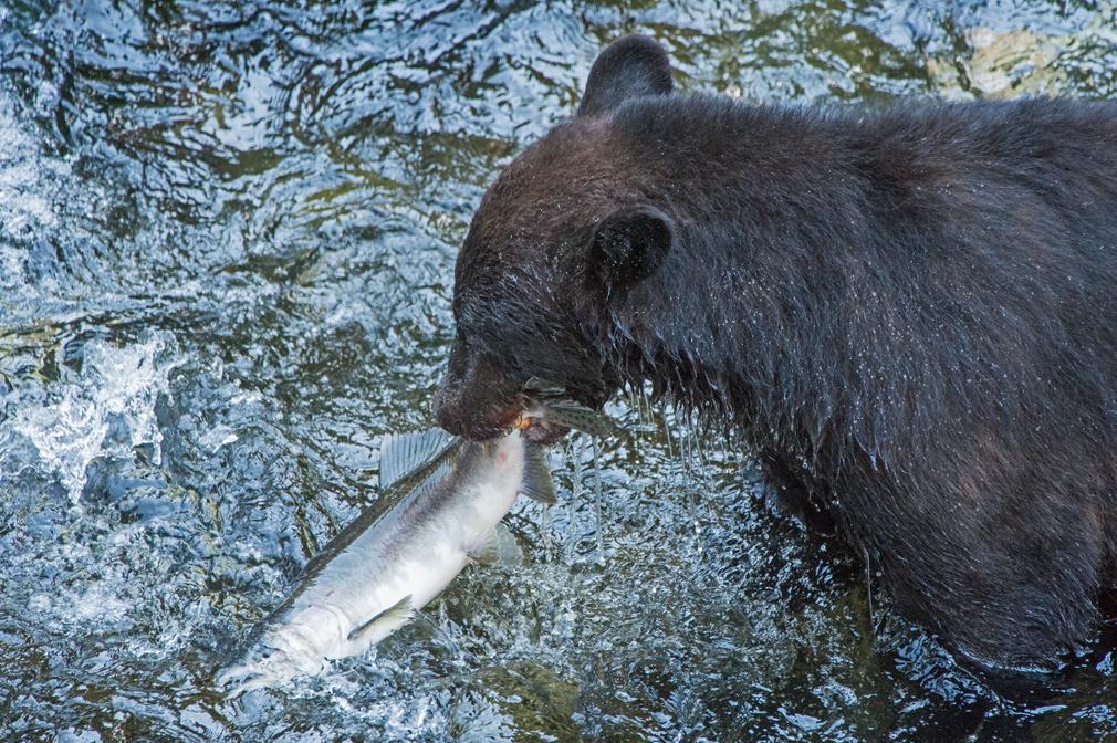The-Art-of-Fishing.jpg