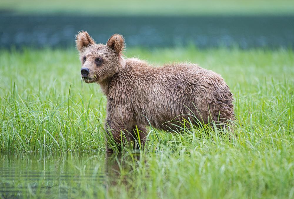Boo-Bear.jpg
