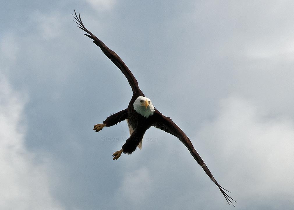 Eagle-Swing.jpg