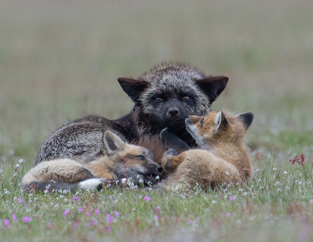 Fox-Family-Moments.jpg
