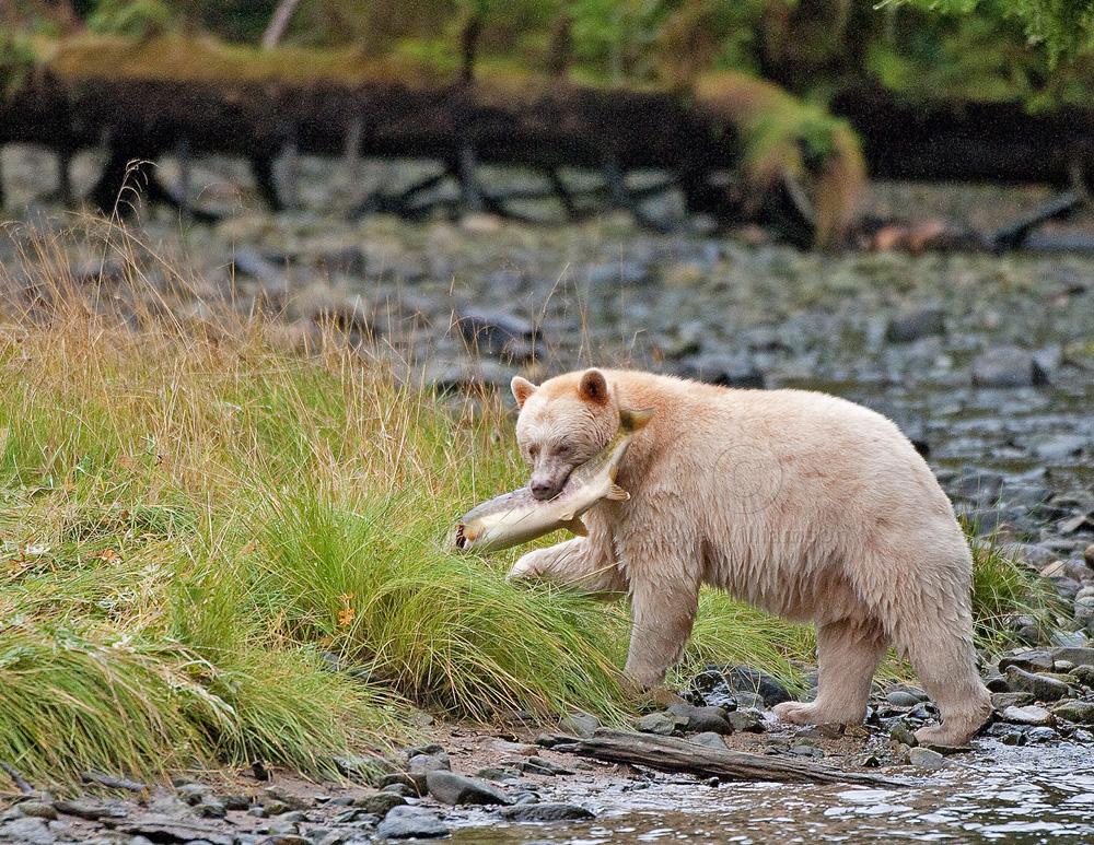 Spirit-Bear-and-Chum.jpg