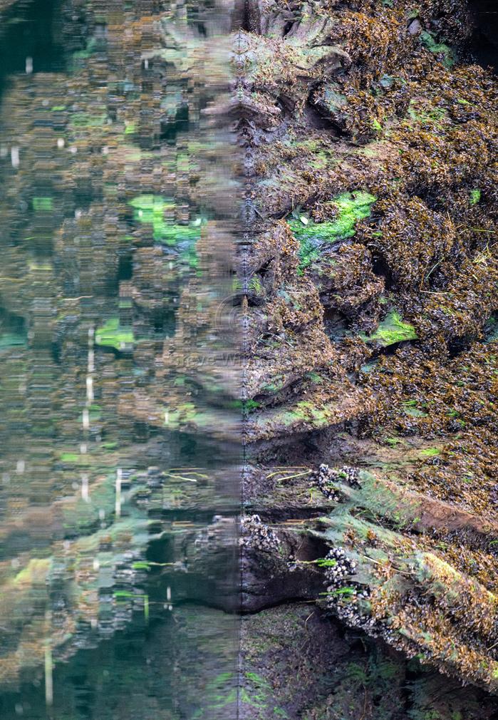 Mud-Flats-Grinch.jpg